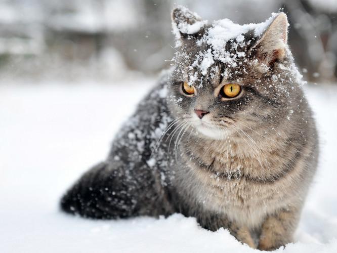 Зима / Фото ілюстративне