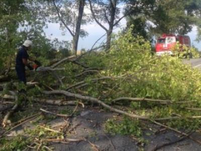 Рятувальники розчистили від повалених дерев дорогу на Іваничівщині