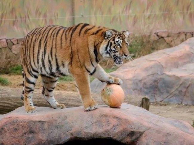 Волинян запрошують у зоопарк із гарбузами