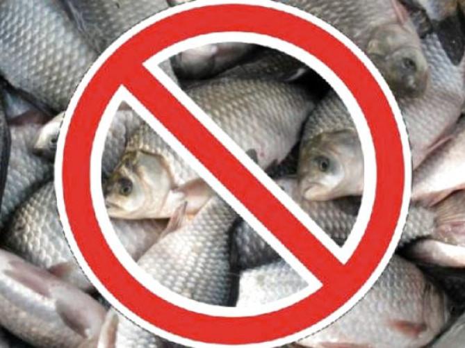 Назвали, на яких водоймах Волині заборонено виловлювати рибу