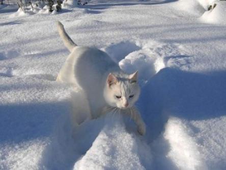Волинян попереджають - йде справжня зима